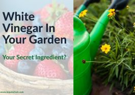White Vinegar To The Rescue! In The Garden